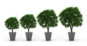 Organic business growth